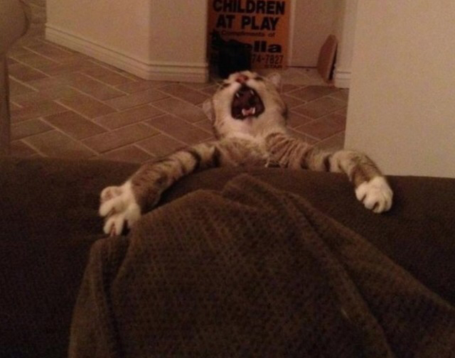 dramatic cat falling off couch