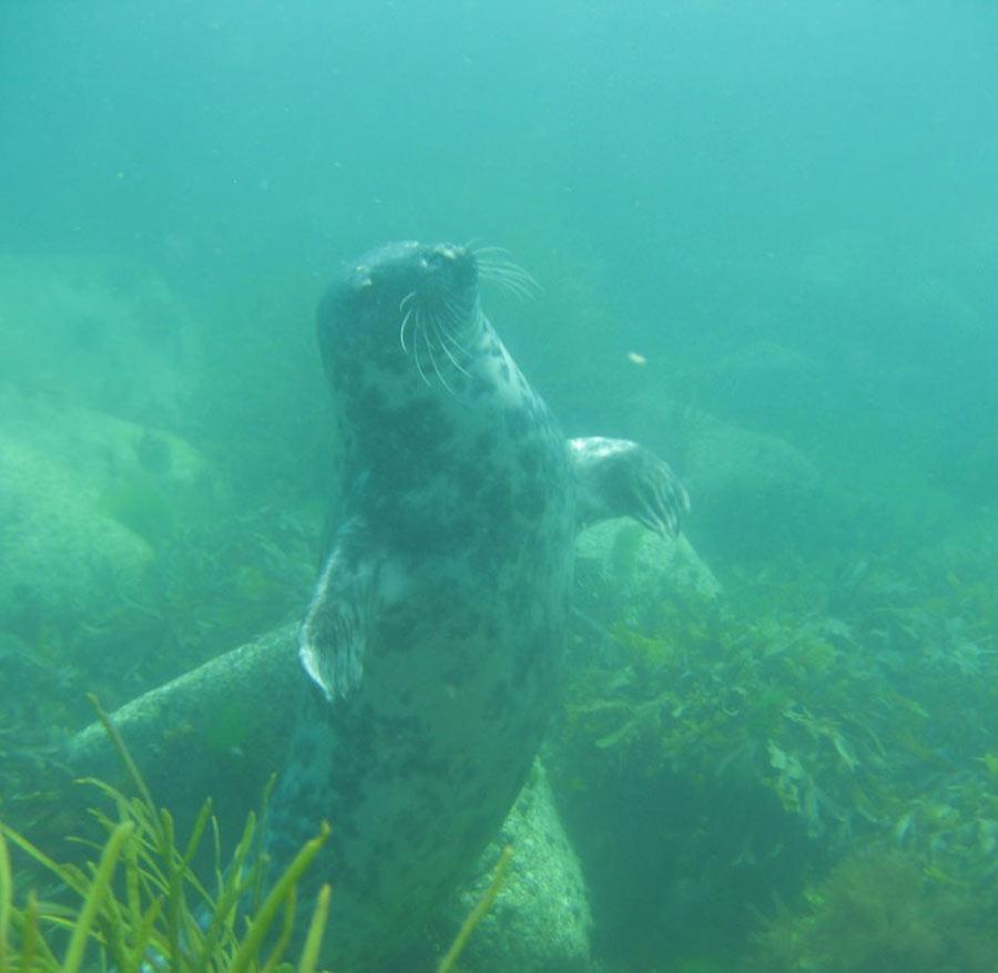 scuba-seal-encounter-4-14646