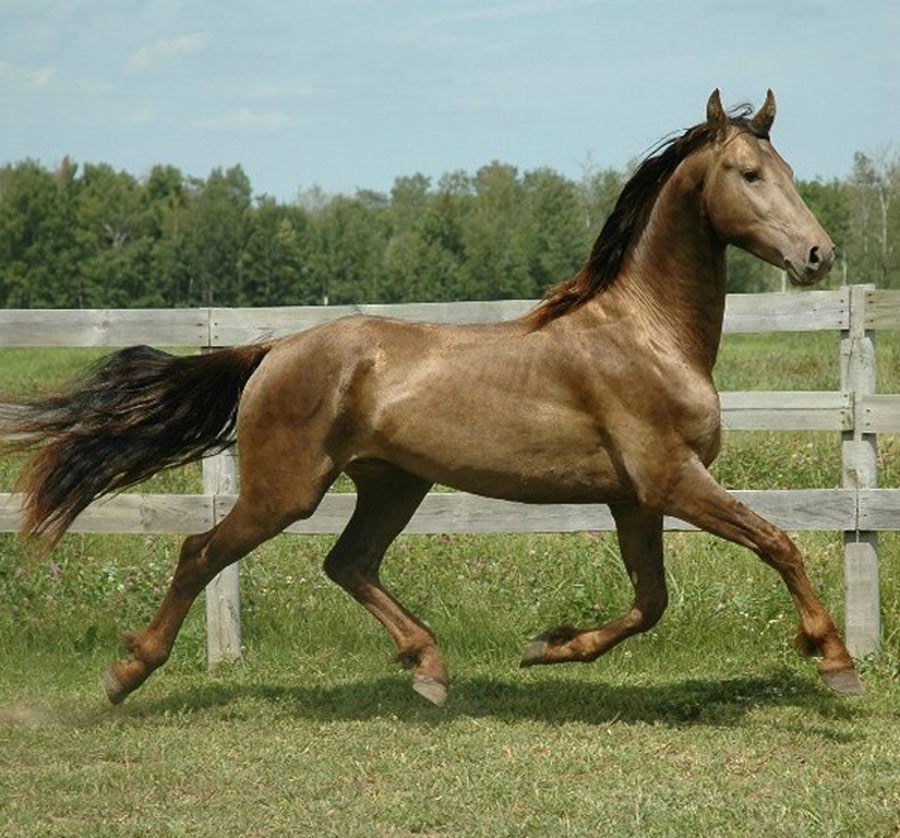 unique-horse-colors-12-94701