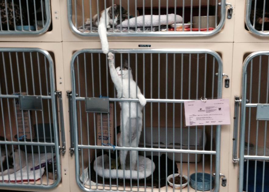 dramatic cat locked up