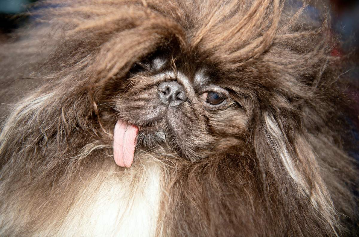 US-ANIMAL-OFFBEAT-UGLY-DOG
