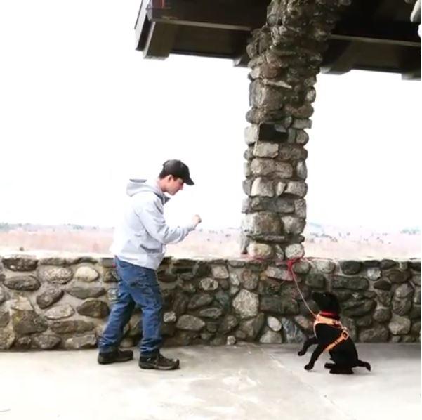deaf-puppy-15