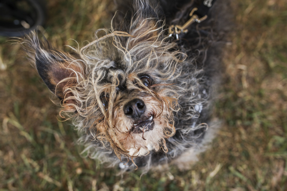 27th Annual World's Ugliest Dog Contest In Petaluma