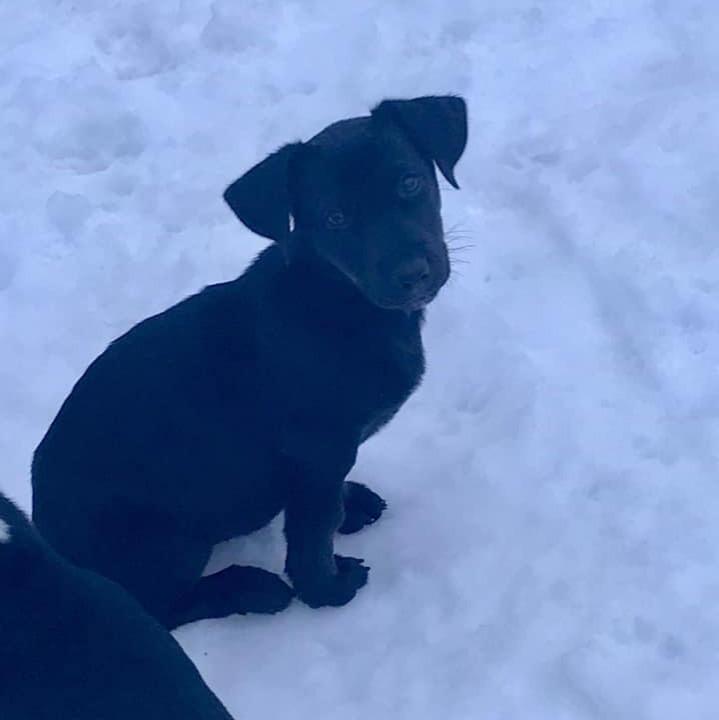 deaf-puppy-11