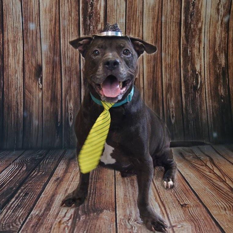 Ashton for Adoption party hat