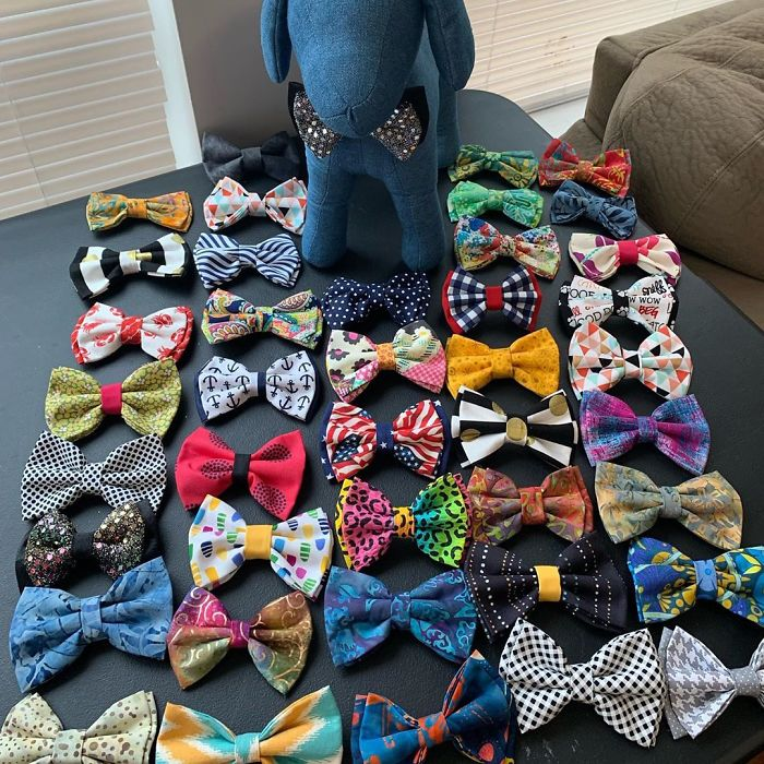 Beaux and Paws instagram of bowties