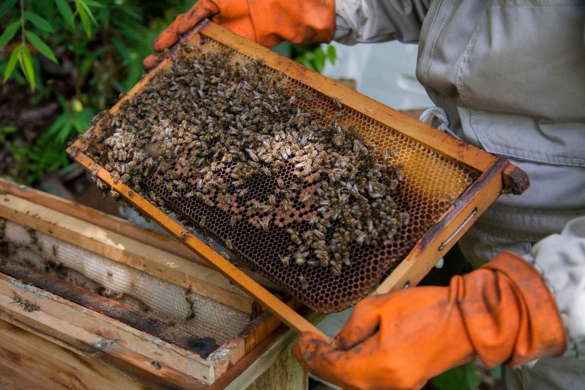 beekeeping in Bolivia Dec 2018