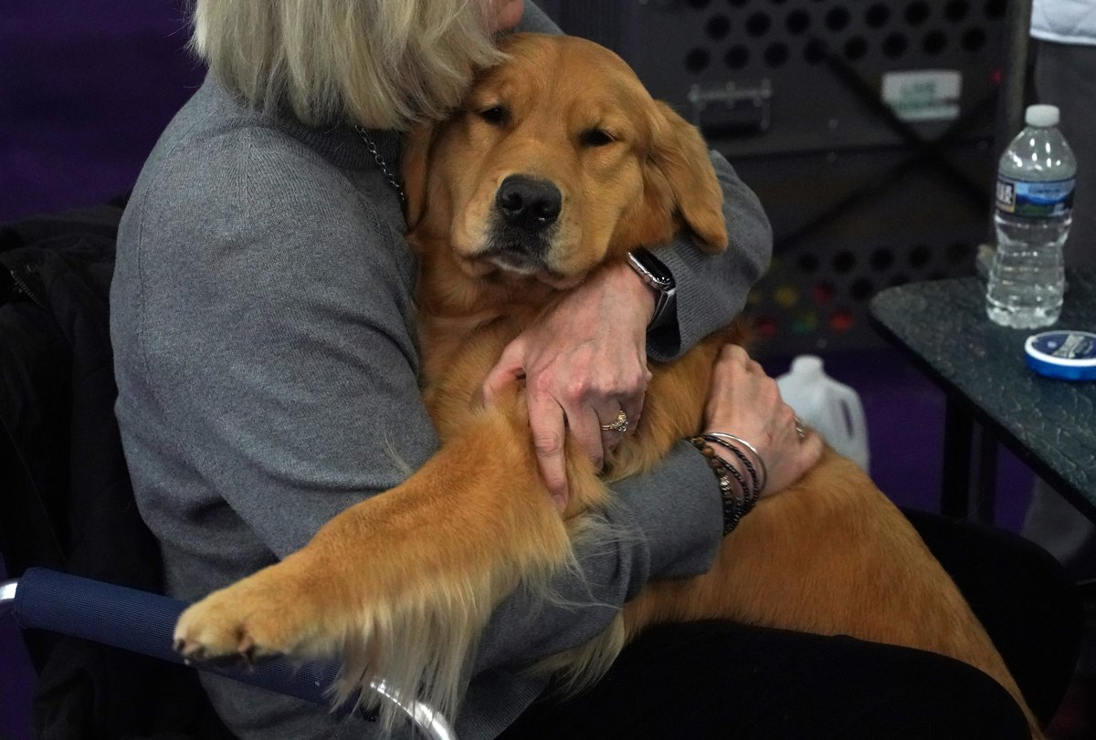 GettyImages-1124269220 golden retriever gets cuddles from its owner