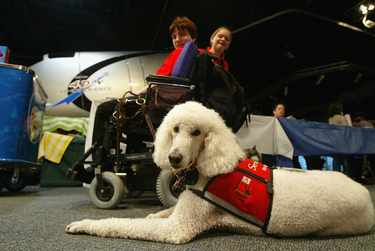 Sparky the service dog - Search and Rescue and Service Dog Day and Awards