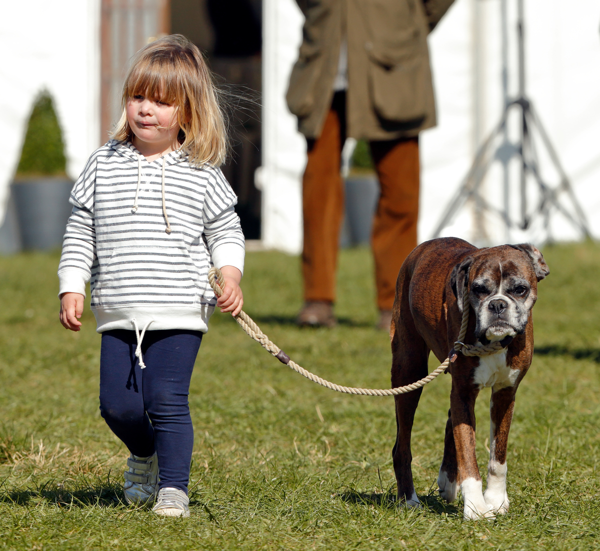 boxer and baby walking down the street