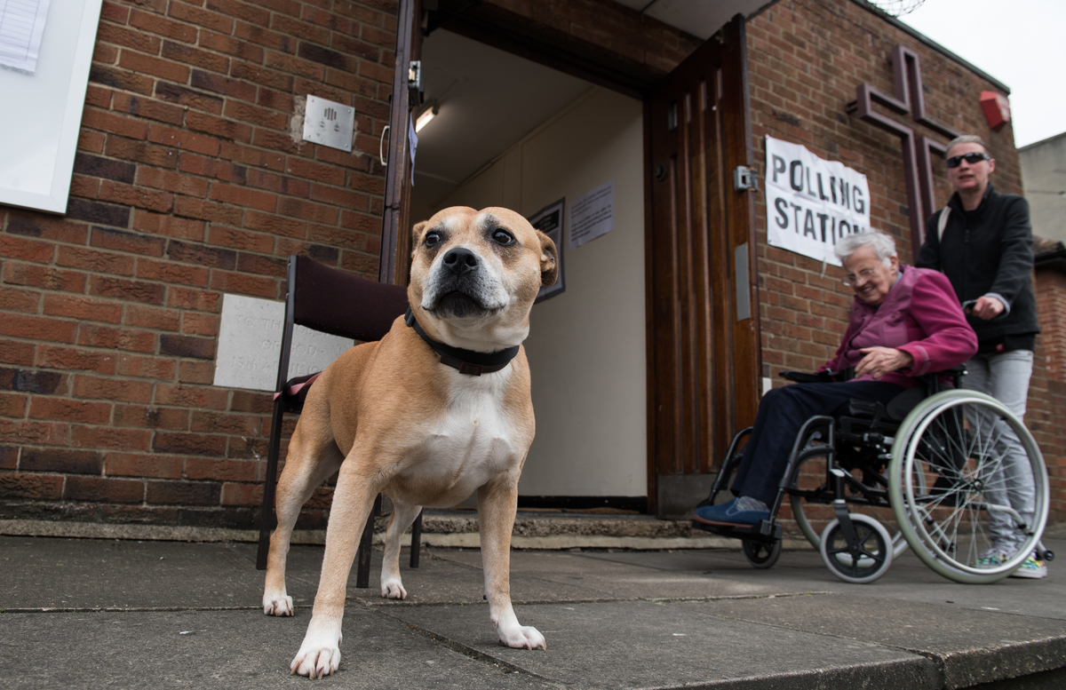 dog outside polling station looking pensive