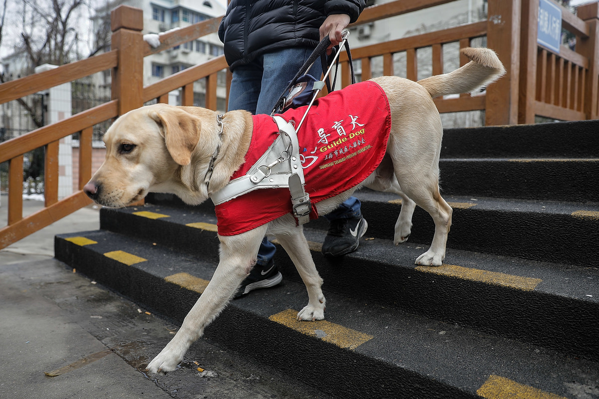 guide dog in Shanghai, China