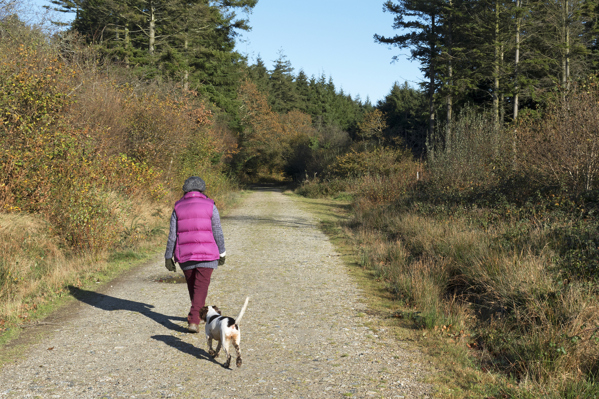 woman walking dog through forest sunny day