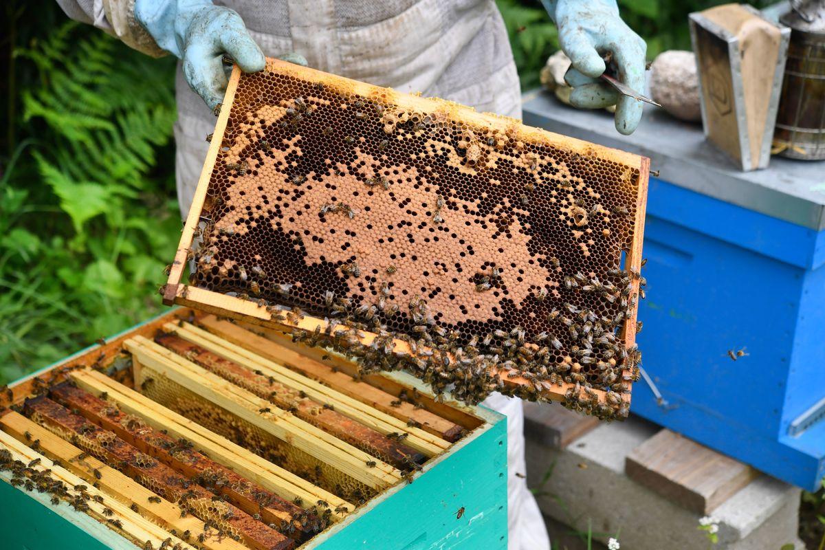 Beekeeping in western france