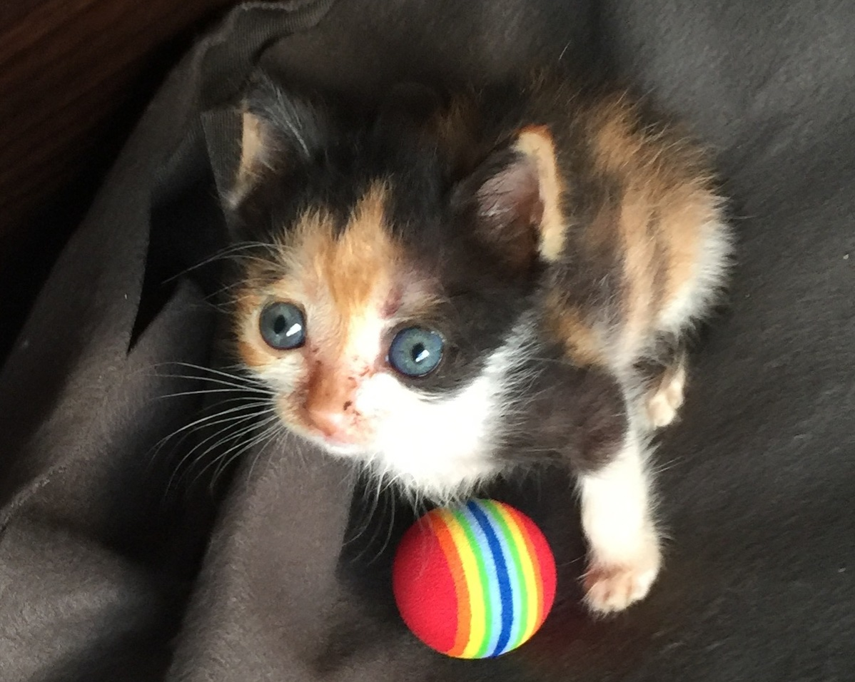 Sansa at 33 days old with a ball toy