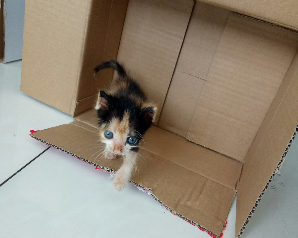 Sansa crawling out of a cardboard box