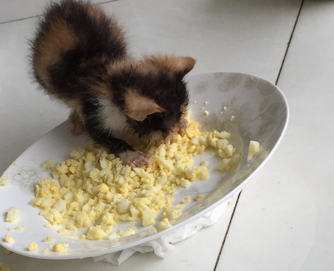 Sansa eating scrambled eggs