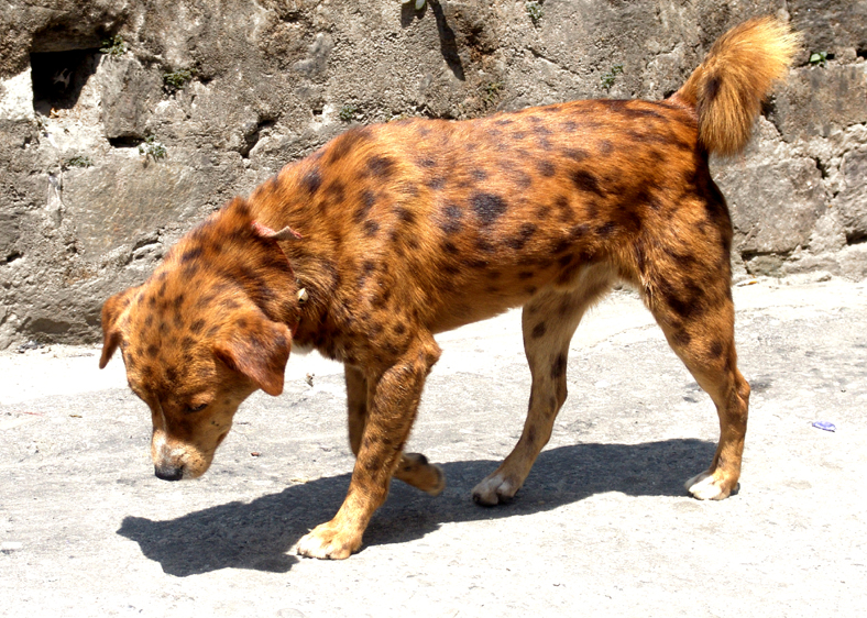 dogs whose fur was spraypainted