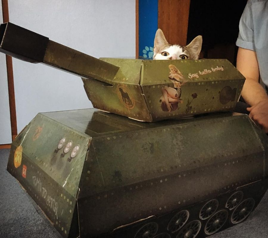 cat tank cat head poking out