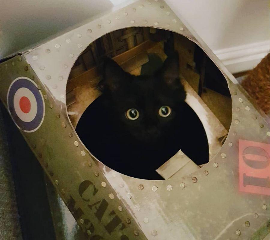 cat in tank black lil head