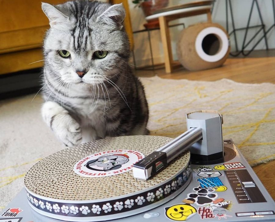 cat record player scratch that