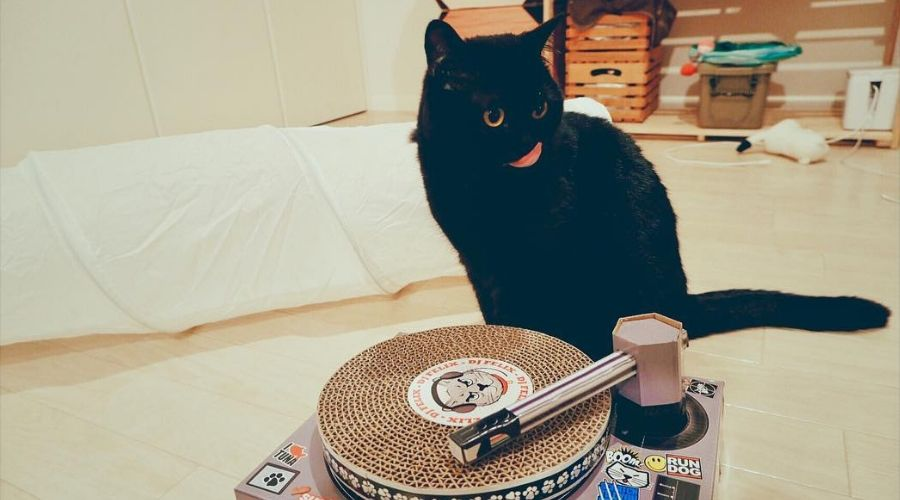cat record player scratching
