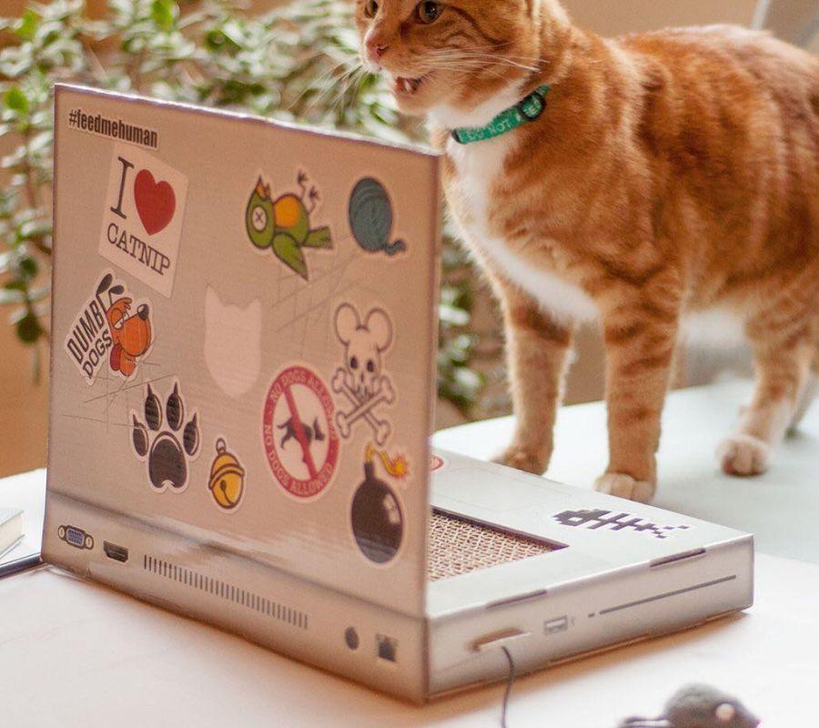 cat laptop computer catnip mouse