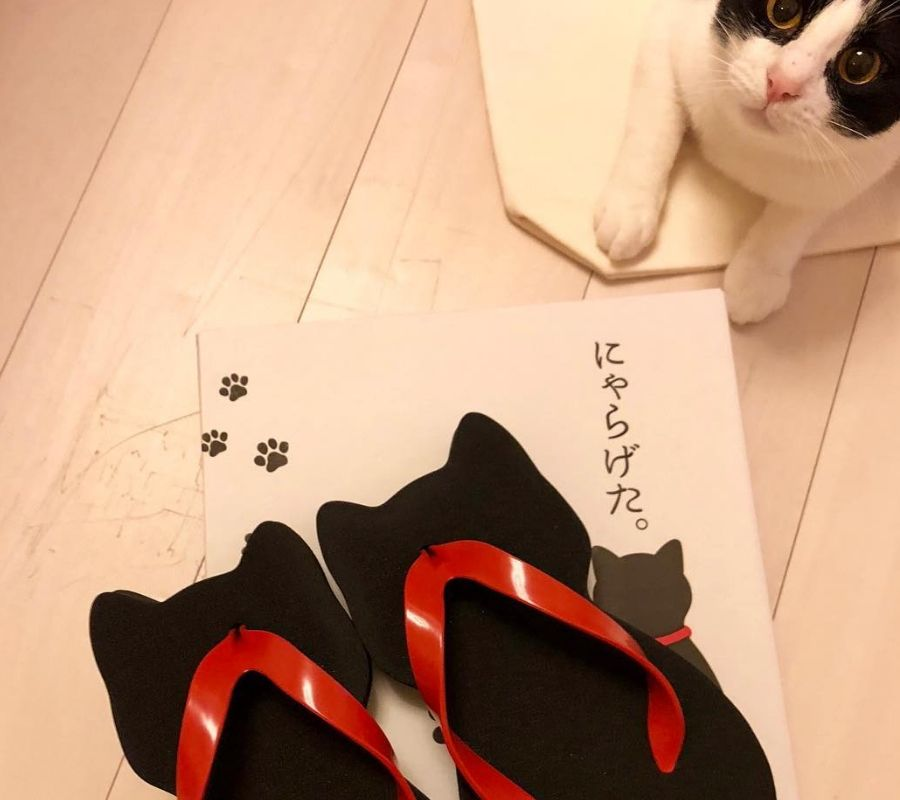 cat and sandals cute cat sandals