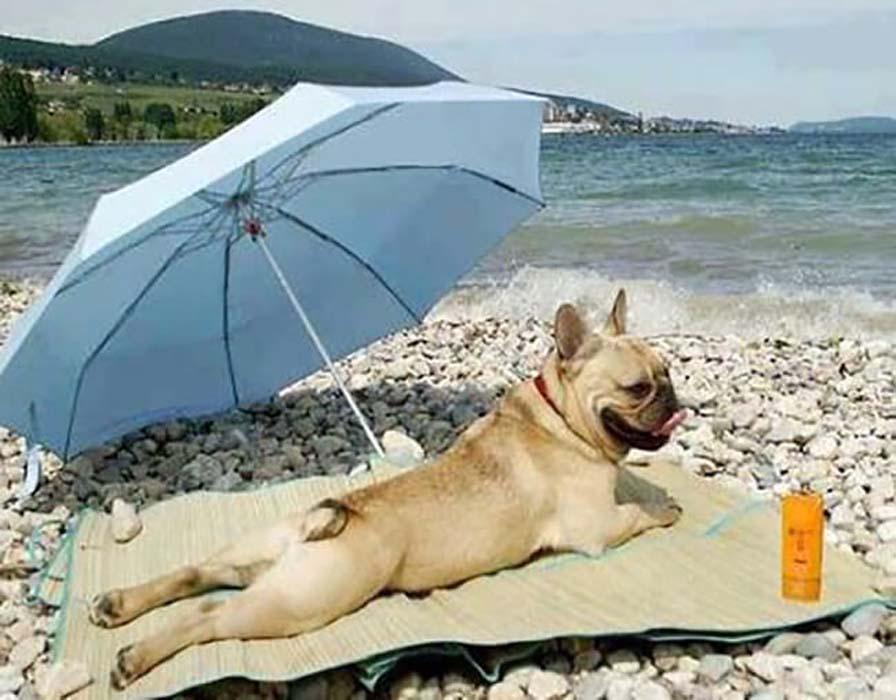 beach-bod-12098.jpg-65555