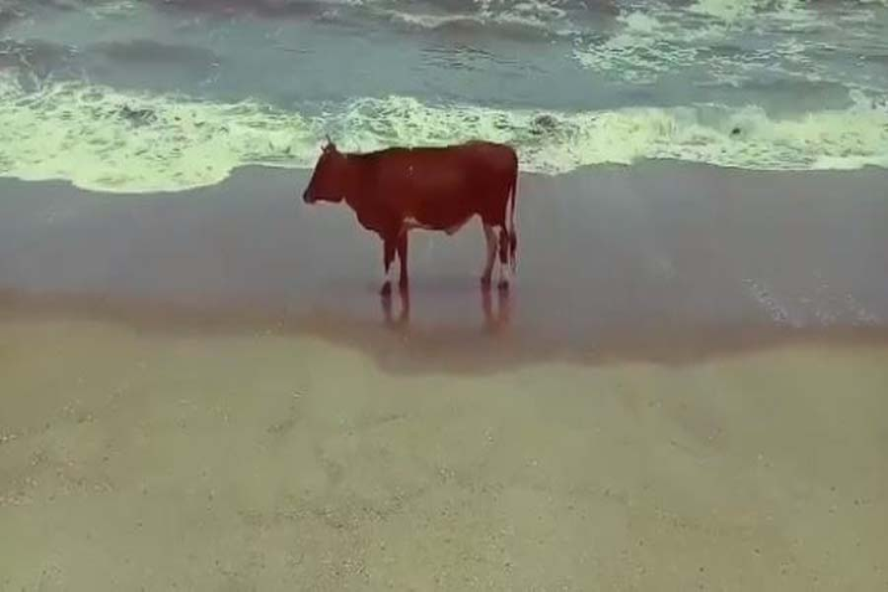 beach-ciow-123.jpg-93078