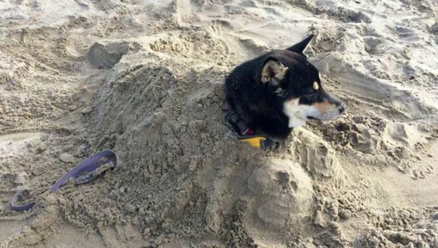 beach-dog-1324.jpg-41999