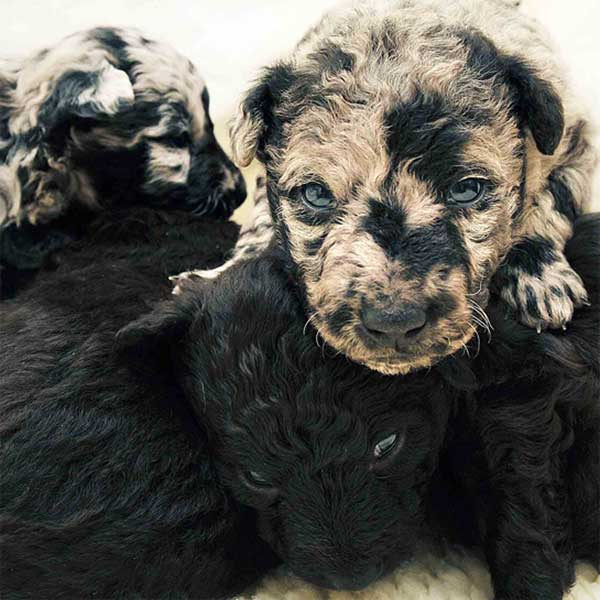 puppies with unique fur.