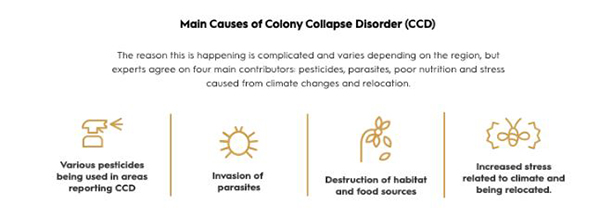 colony-collapse-bees