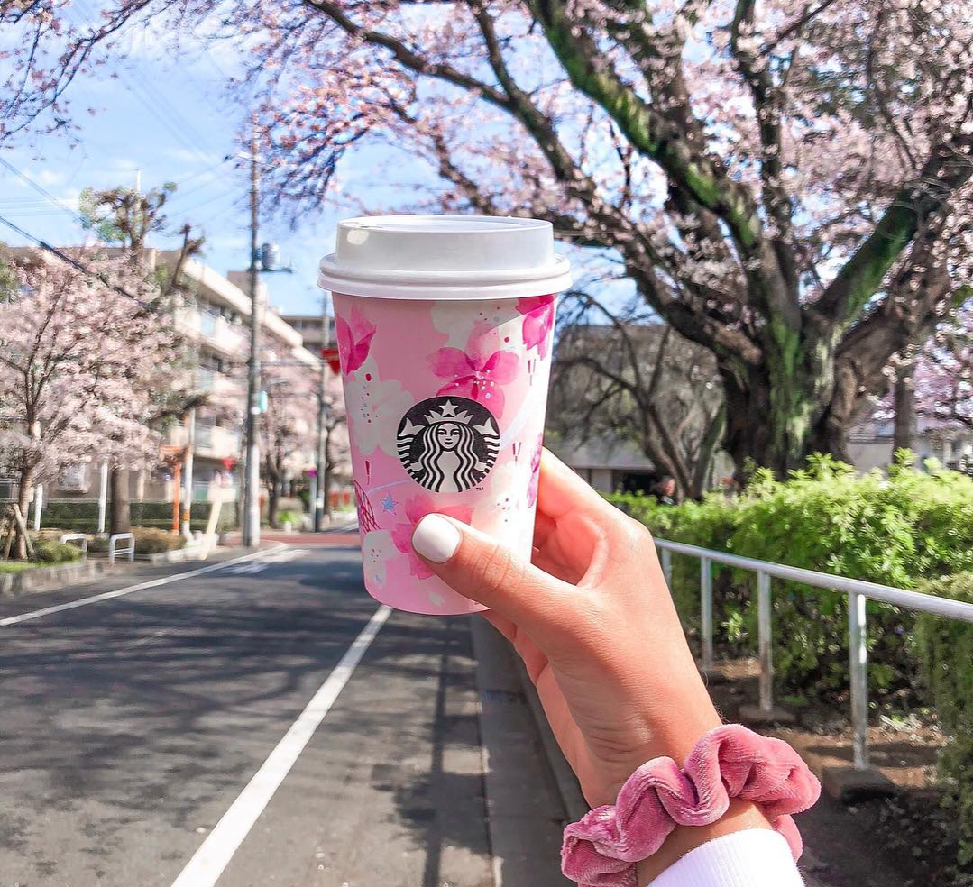 sakura blossom drink with trees