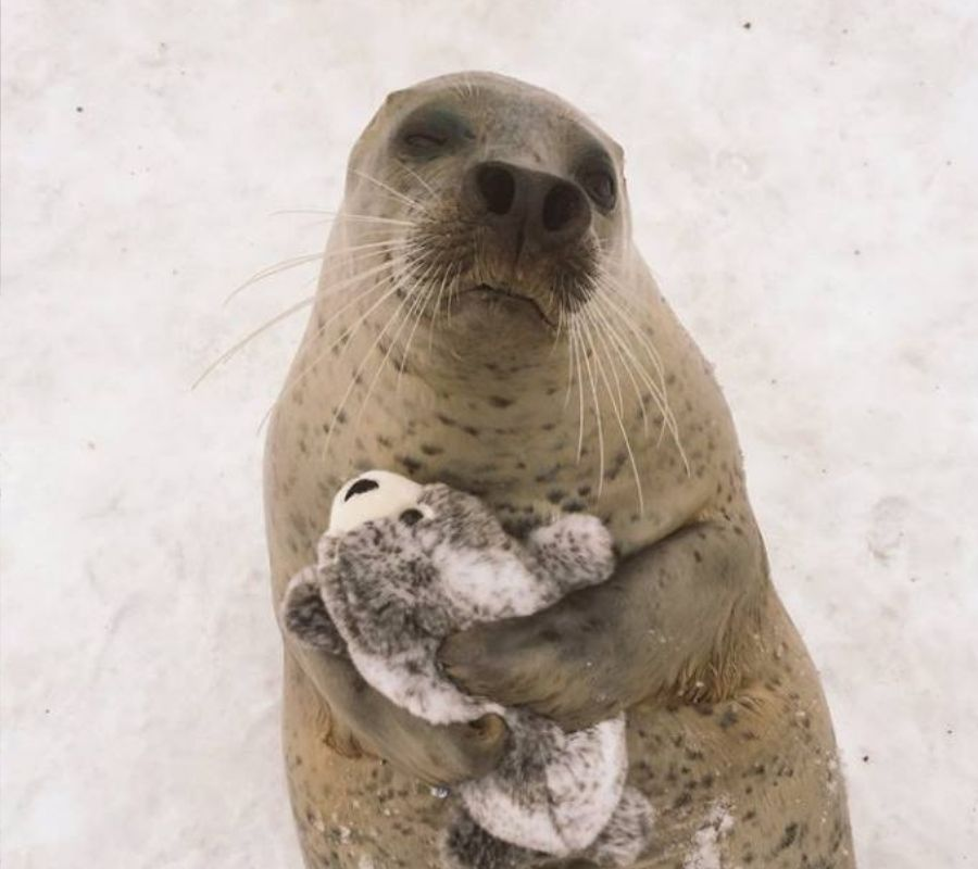 seal hugging stuffed animal version of itself adorable