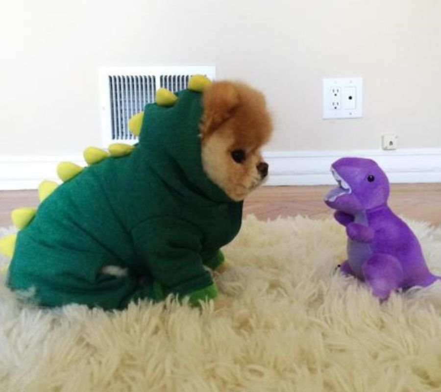 dog in dinosaur costume with small dino
