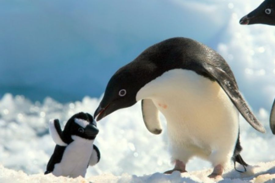 penguin with a stuffed penguin kissing it