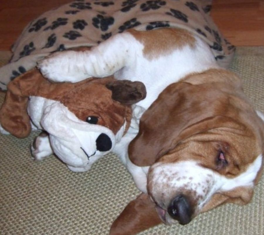 dog with dog stuffed animal cuddling cute