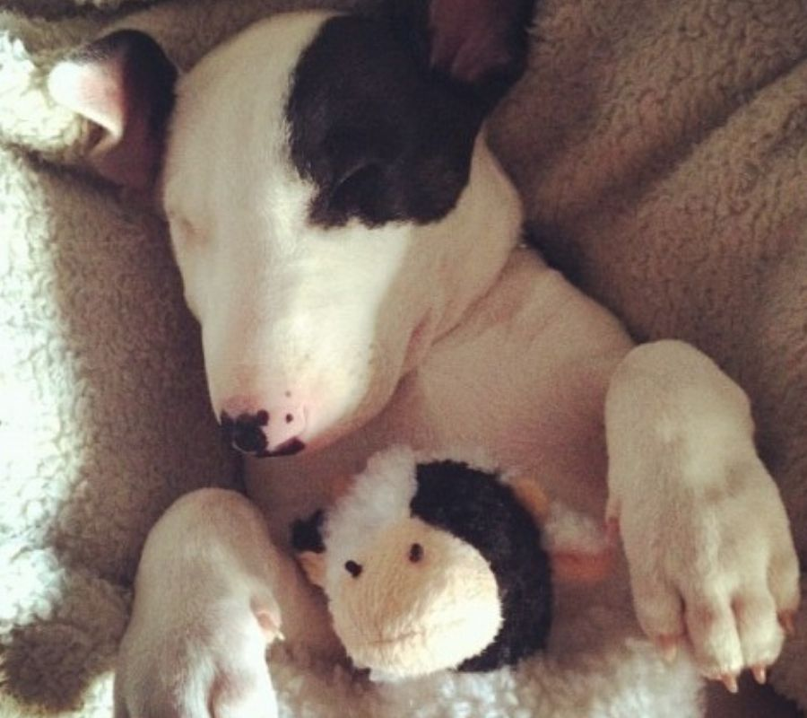 dog with mini version of self stuffed animal