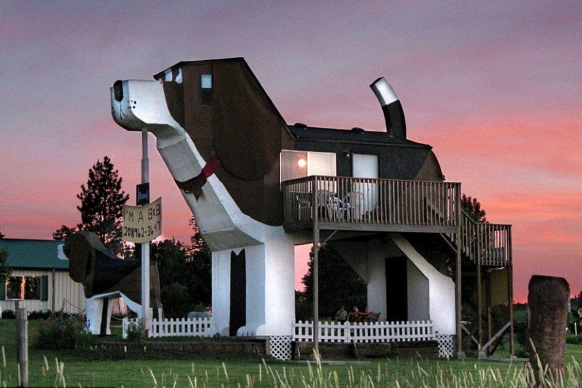 dog house shaped like a beagle people live there