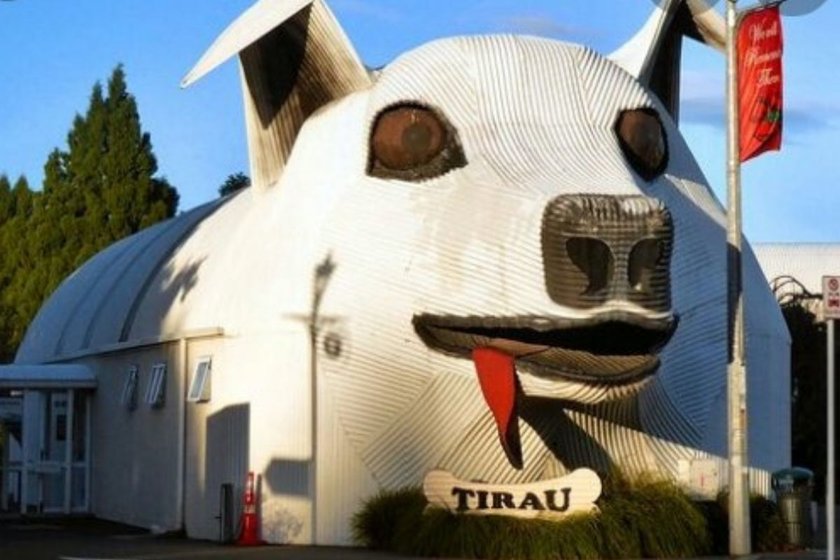 dog building tongue hanging out tourist center in tirau