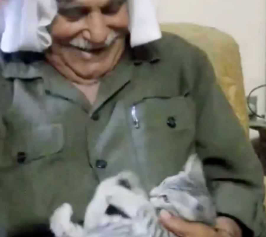 grandpa with kitten playing with it