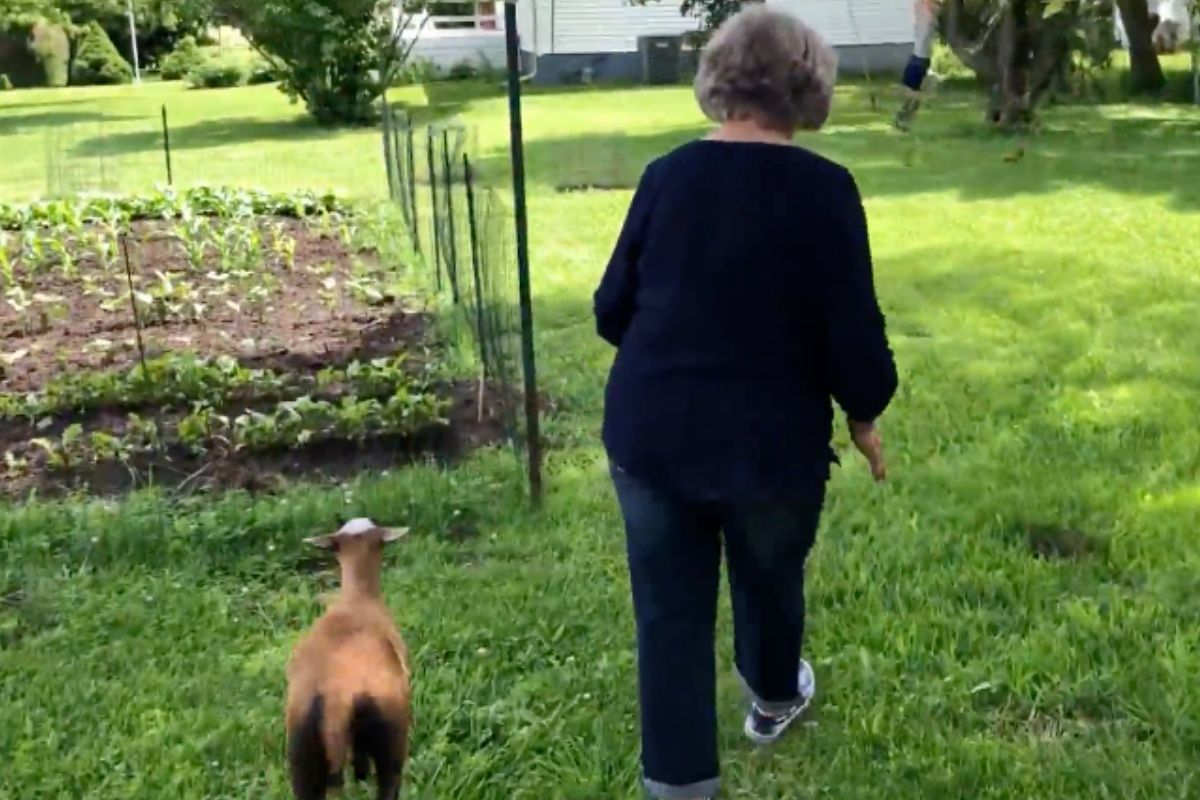 grandma with lamb walking through garden