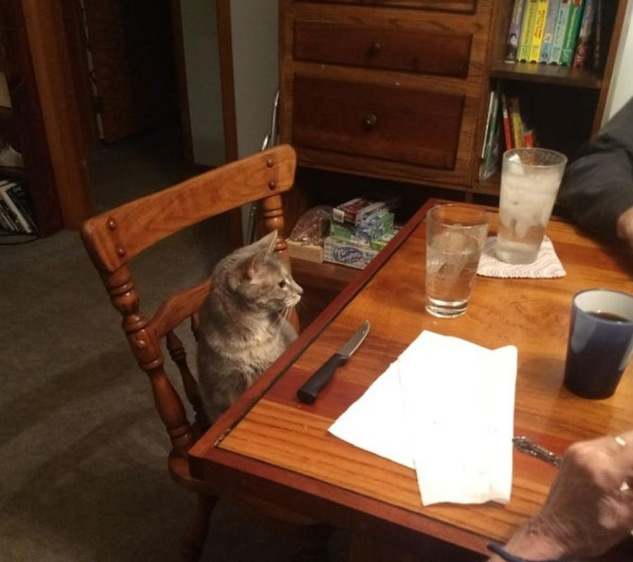 cats sitting at table grandparents set a spot