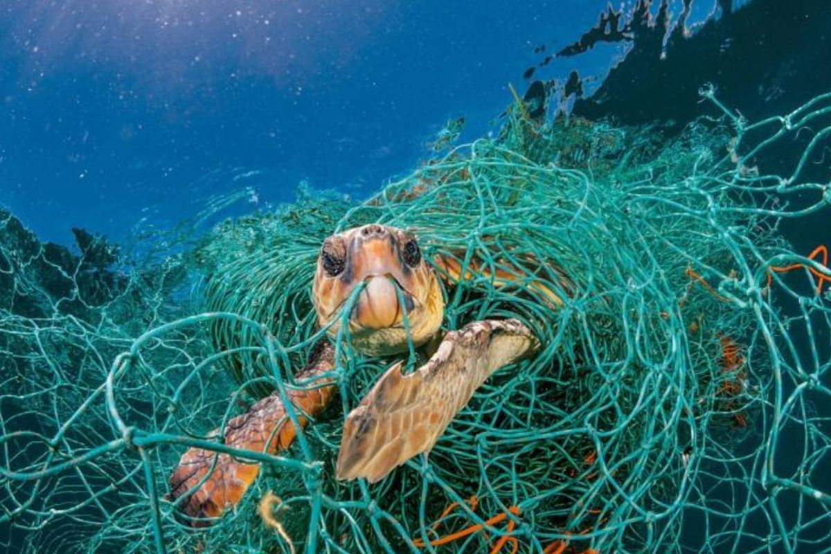 sea turtle caught in netting green floating netting surrounding whole thing