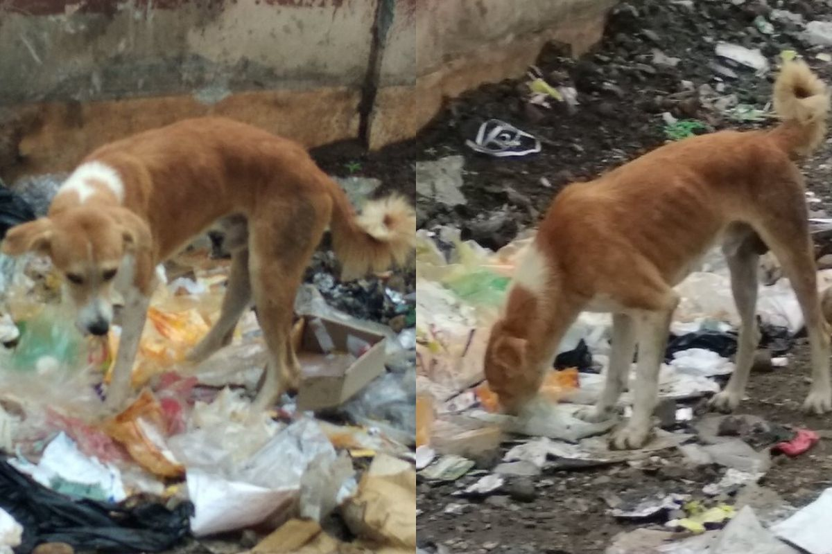 dog looks like it's gonna eat trash eating on side of the road