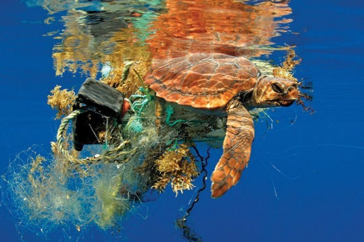 sea turtle attached to a lot of garbage sad floating along weighed down by a bunch of stuff caught on fins