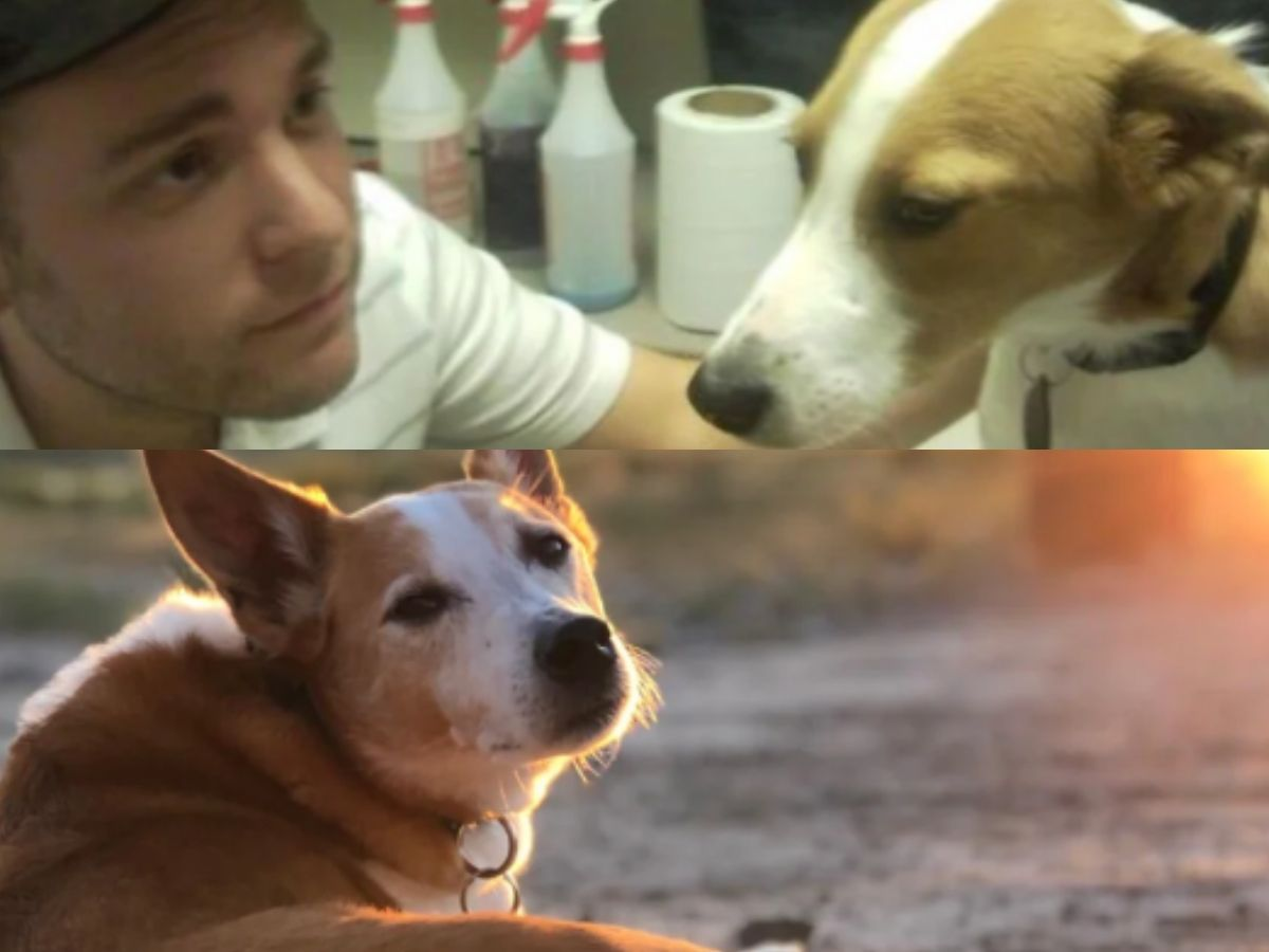 link the dog before and after being adopted looking sad and then happy