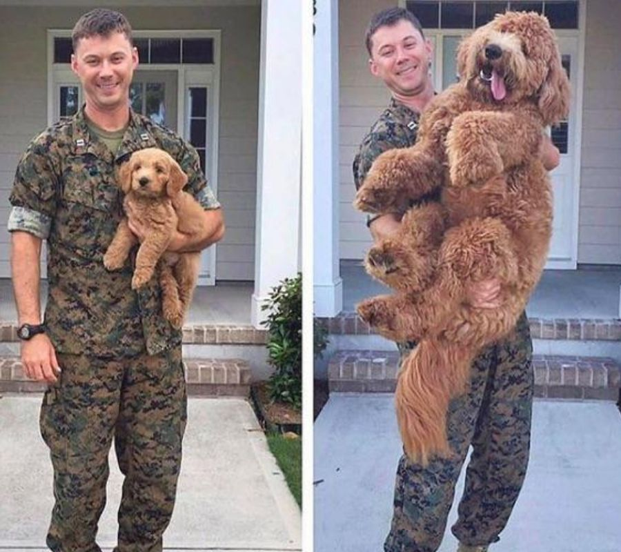 small dog big dog side by side photo guy in military holding him