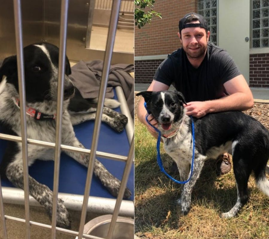 dog got a forever home happy to be alive posing with owner black and white dog